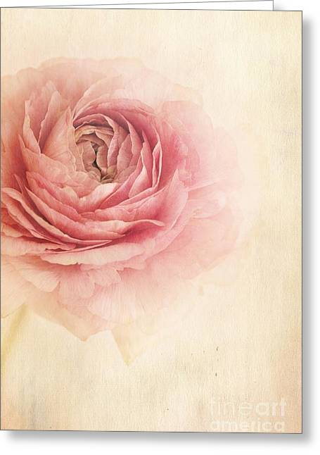 Ranunculus Greeting Cards - Sogno Romantico Greeting Card by Priska Wettstein
