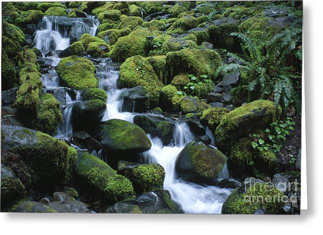 Pnw Greeting Cards - Sol Duc Stream Greeting Card by Sandra Bronstein