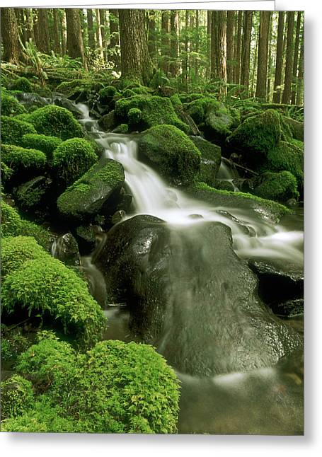 Brookes Greeting Cards - Sol Duc Watershed, Olympic National Greeting Card by Ron Watts