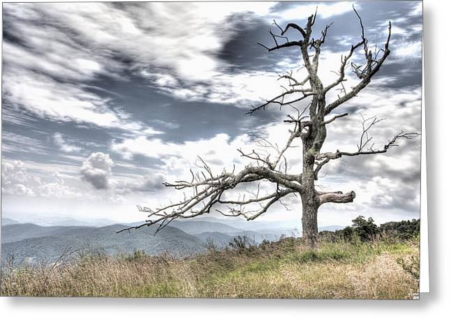 Solemn Tree Greeting Card by Michael Clubb