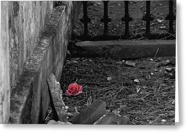 Solitary Rose Greeting Card by Renee Barnes