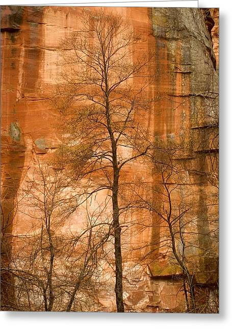 Oak Creek Greeting Cards - Solitary Tree In Front Of Red Rock Greeting Card by Charles Kogod