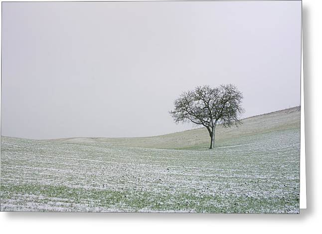 Snowy Day Greeting Cards - Solitary tree in winter Greeting Card by Bernard Jaubert
