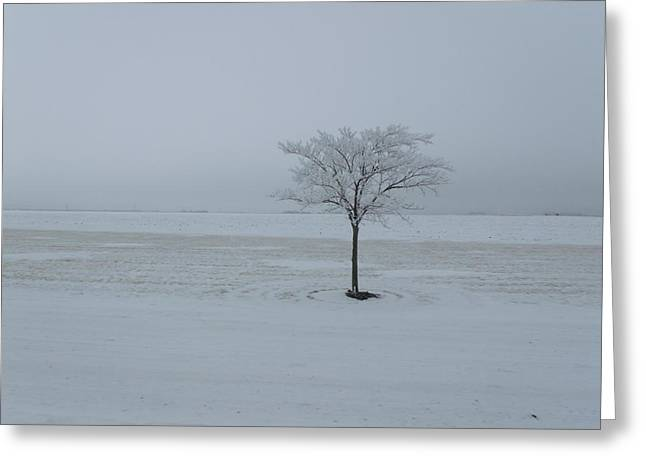 By Myself Greeting Cards - Solitary White Tree 2 Greeting Card by Brian  Maloney
