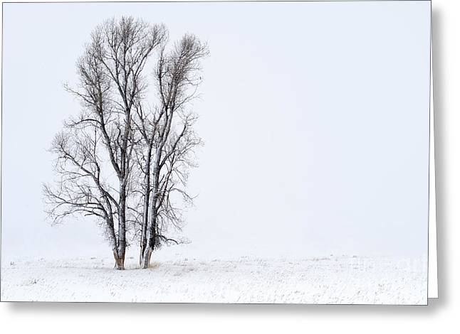 Snowstorm Greeting Cards - Solitude Greeting Card by Sandra Bronstein