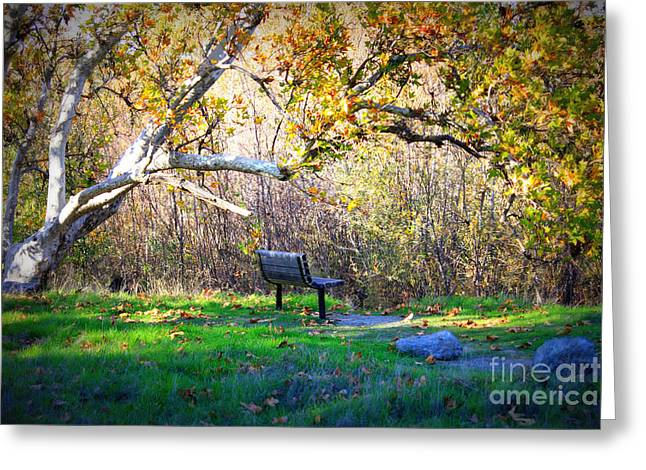 Fall Scene Greeting Cards - Solitude under the Sycamore Greeting Card by Carol Groenen