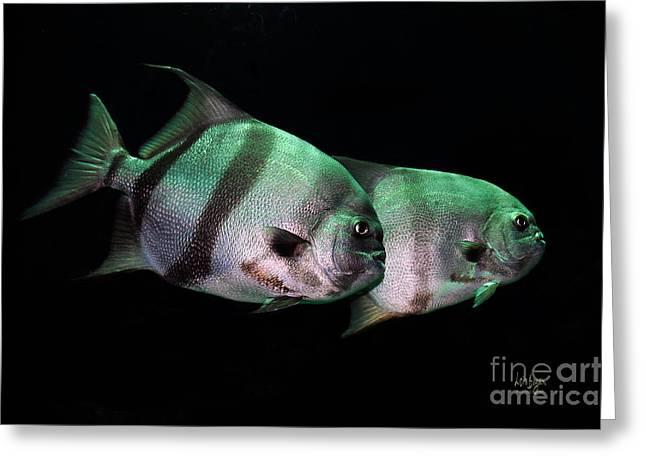 Aquarium Fish Greeting Cards - Something Fishy This Way Comes Greeting Card by Lois Bryan