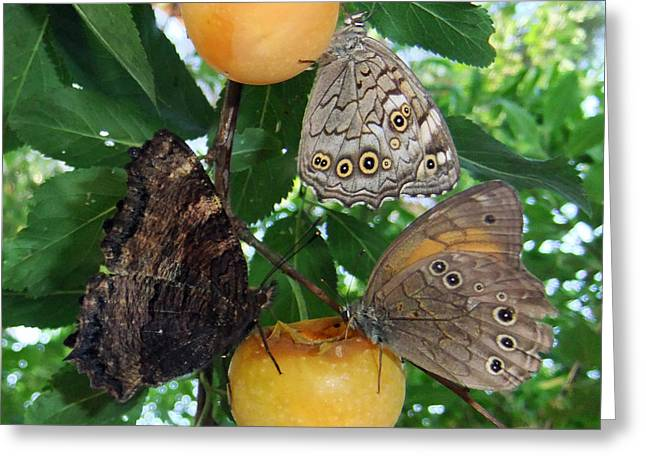Insect Butterflies Of Lesvos Greeting Cards - Something Fruity  Greeting Card by Eric Kempson
