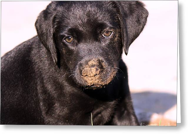 Puppies Photographs Greeting Cards - Sometimes You Get Dirty Greeting Card by Cathy  Beharriell