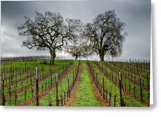 Sonoma County Vineyard Greeting Card by Joan McDaniel