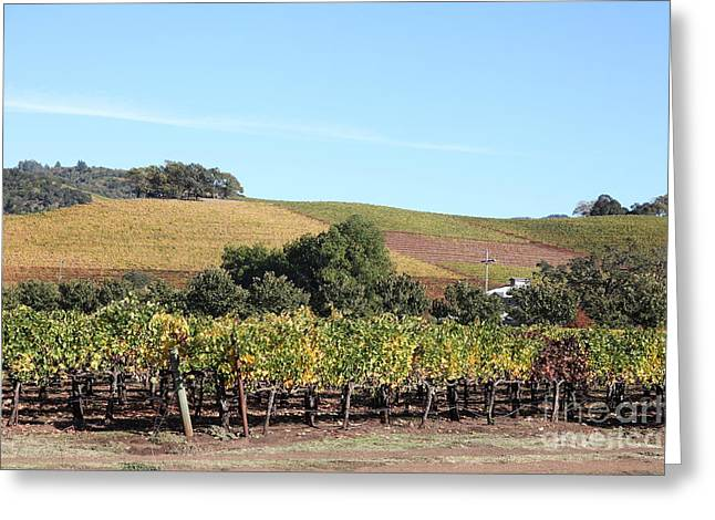 Sonoma County Vineyards. Greeting Cards - Sonoma Vineyards - Sonoma California - 5D19307 Greeting Card by Wingsdomain Art and Photography