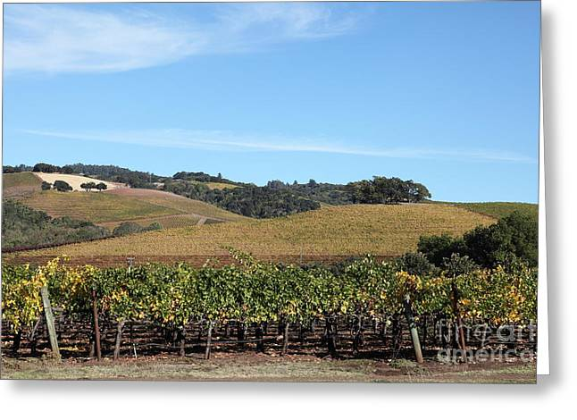 Sonoma County Vineyards. Greeting Cards - Sonoma Vineyards - Sonoma California - 5D19309 Greeting Card by Wingsdomain Art and Photography
