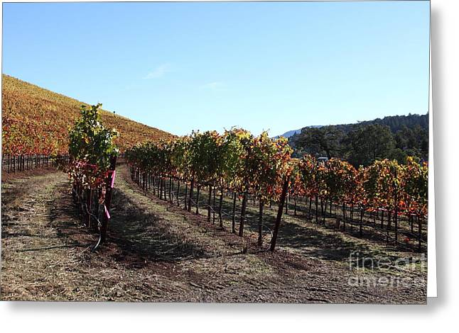 Sonoma County Vineyards. Greeting Cards - Sonoma Vineyards - Sonoma California - 5D19311 Greeting Card by Wingsdomain Art and Photography