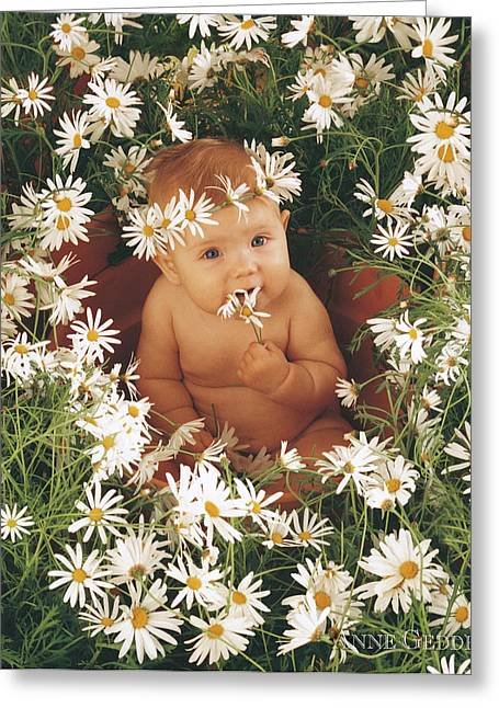 Anne Geddes Photographs Greeting Cards - Sophie in Daisy Pot Greeting Card by Anne Geddes