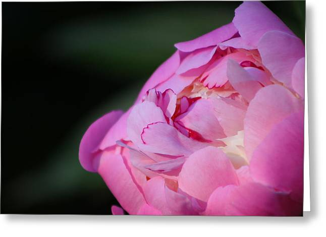 Sorbet Photographs Greeting Cards - Sorbet Peony Greeting Card by Ruthie Lombardi