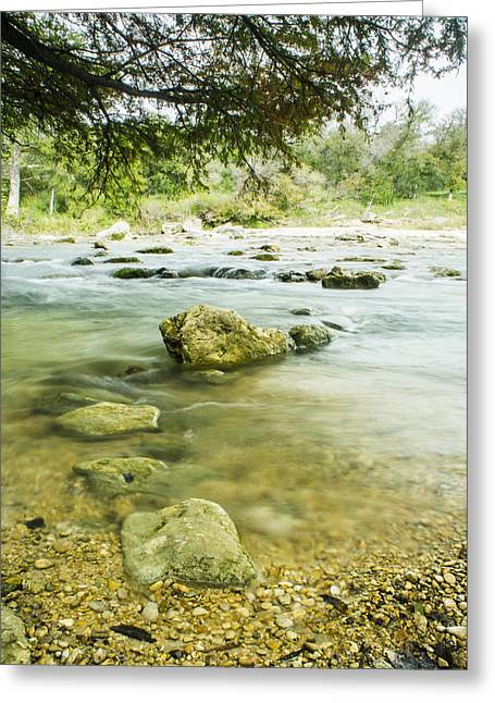 Bald Cypress Greeting Cards - Sound of the Guadaloupe River Greeting Card by Ellie Teramoto