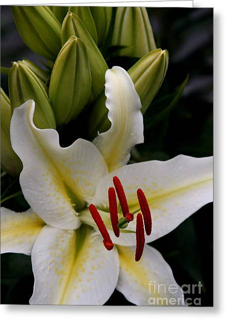 Stamen Digital Art Greeting Cards - Sounding on Forever Greeting Card by Sharon Mau