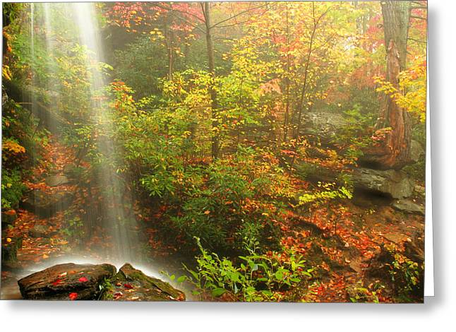 Sounds Of Autumn Greeting Card by Darren Fisher