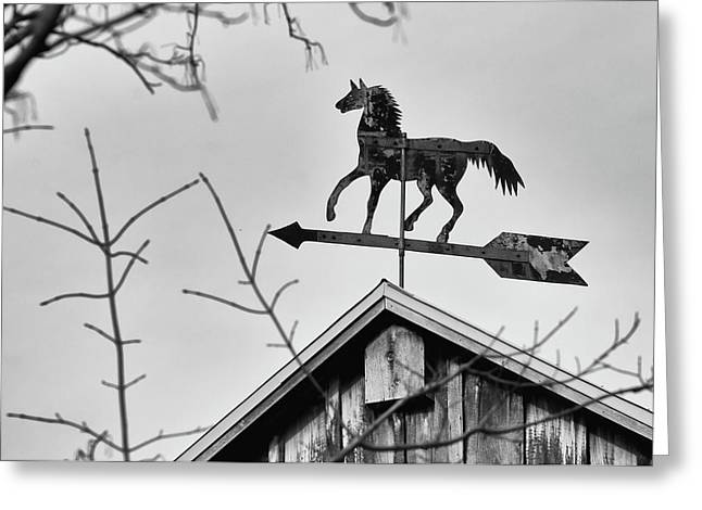 Windvane Greeting Cards - South by Southwest Greeting Card by Guy Whiteley