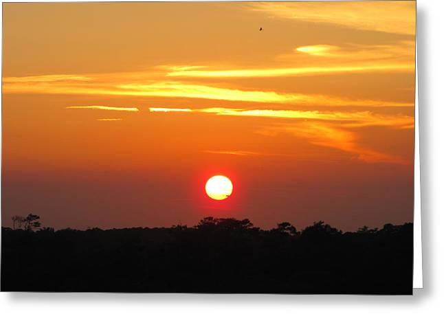 Shane Brumfield Greeting Cards - South Carolina Sunset Greeting Card by Shane Brumfield