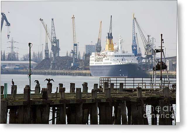 Cormorants Greeting Cards - Southampton old pier and docks Greeting Card by Jane Rix