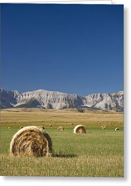 Canadian Prairies Greeting Cards - Southern Alberta, Canada Hay Bales Greeting Card by Philippe Widling