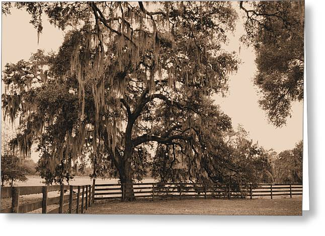 Overhang Greeting Cards - Southern Charm Greeting Card by Kristin Elmquist