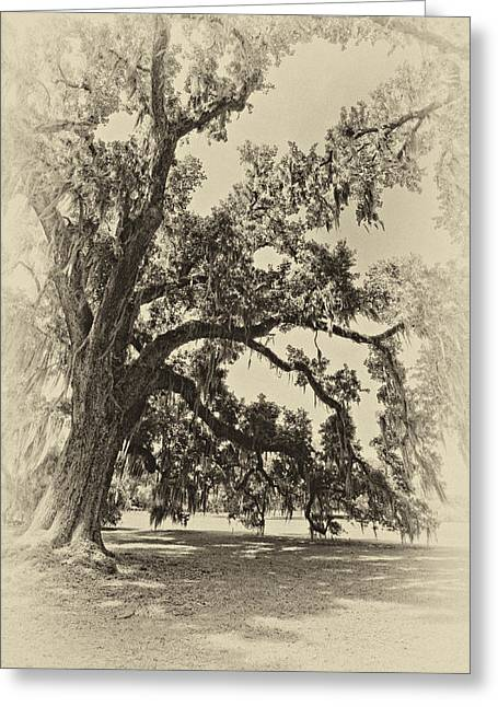 Evergreen Plantation Photographs Greeting Cards - Southern Comfort sepia Greeting Card by Steve Harrington