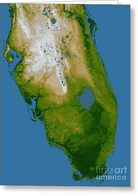 Relief Map Greeting Cards - Southern Florida Greeting Card by Stocktrek Images