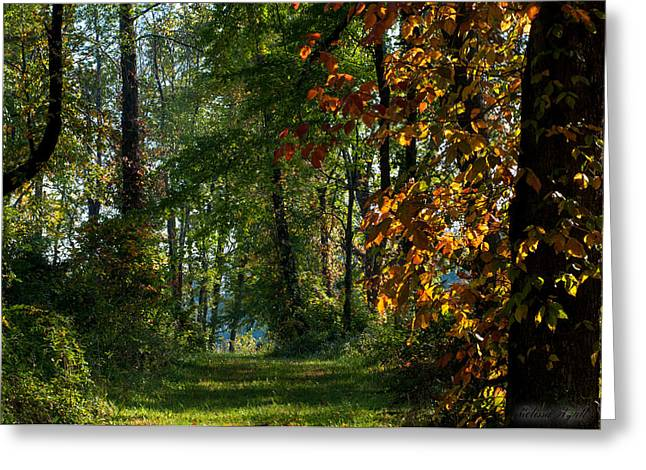 Southern Indiana Fall Colors Greeting Card by Melissa Wyatt