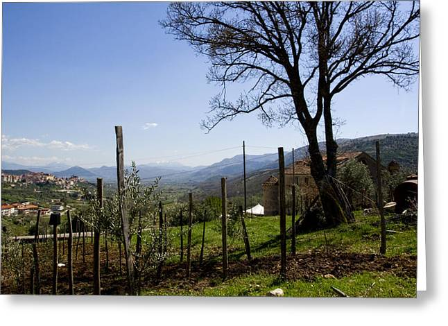Olive Grove Greeting Cards - Southern Italian Life Greeting Card by Michelle Sheppard