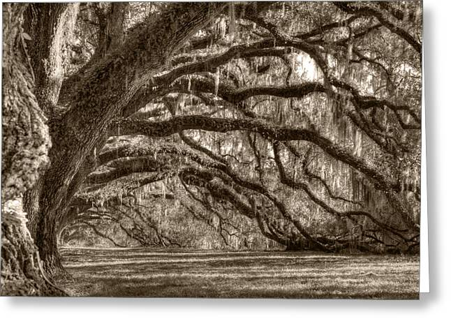 Moss Greeting Cards - Southern Live Oak Trees Greeting Card by Dustin K Ryan