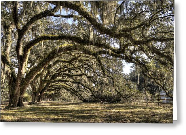 Live Oak Trees Greeting Cards - Southern Live Oaks with Spanish Moss Color Greeting Card by Dustin K Ryan