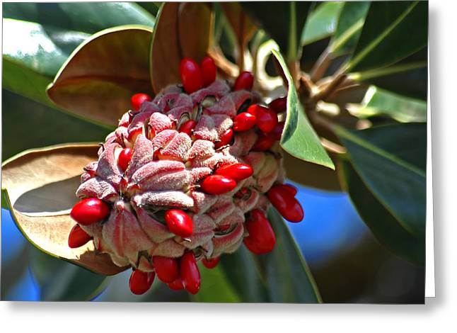 Southern Magnolia Greeting Card by Carolyn Marshall