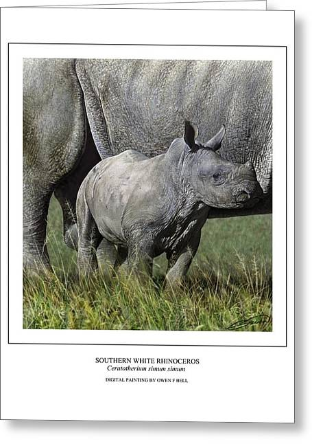 Rhinoceros Greeting Cards - SOUTHERN WHITE RHINOCEROS CALF Ceratotherium simum simum Greeting Card by Owen Bell