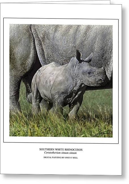 Rhinoceros Digital Greeting Cards - SOUTHERN WHITE RHINOCEROS CALF Ceratotherium simum simum Greeting Card by Owen Bell