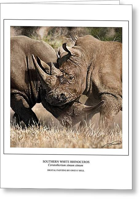 Rhinocerotidae Greeting Cards - Southern White Rhinos Jousting Greeting Card by Owen Bell