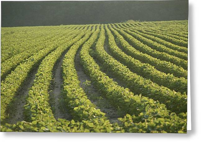 American Food Greeting Cards - Soybean Crop Ready To Harvest Greeting Card by Brian Gordon Green