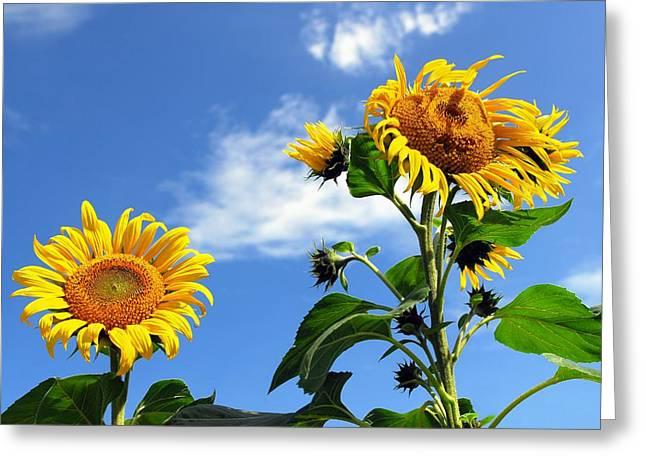 21st Greeting Cards - Space Sunflower Greeting Card by Detlev Van Ravenswaay