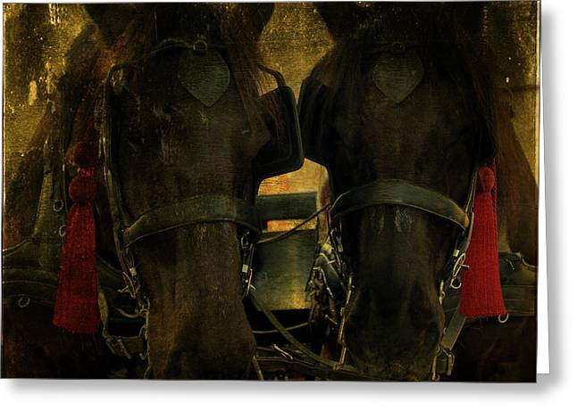 Spanish Carriage Horses Greeting Card by Lee Dos Santos