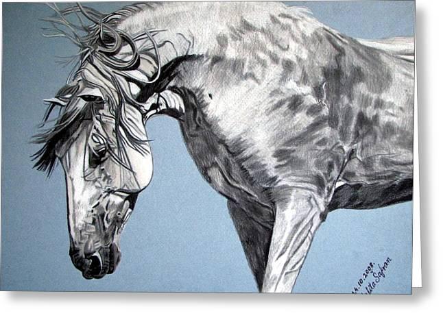 Melita Greeting Cards - Spanish horse Greeting Card by Melita Safran