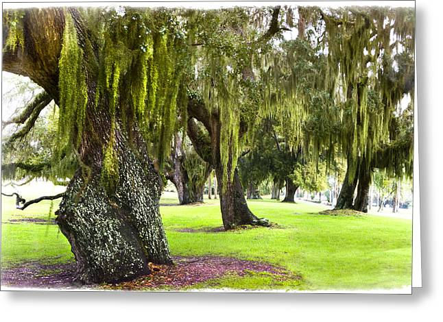 Foggy Beach Greeting Cards - Spanish Moss at Jekyll Island Greeting Card by Debra and Dave Vanderlaan