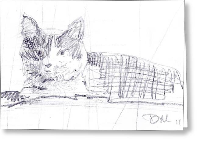 Graphite Greeting Cards - Spanky the Cat Greeting Card by Donald Maier