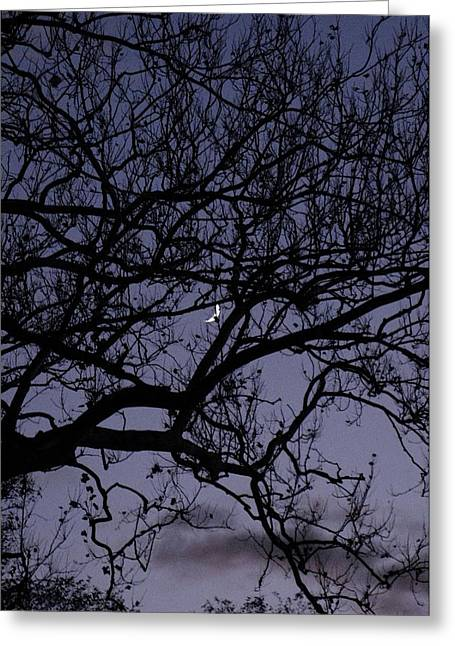 American Sycamore Greeting Cards - Spared Greeting Card by Jane Alexander