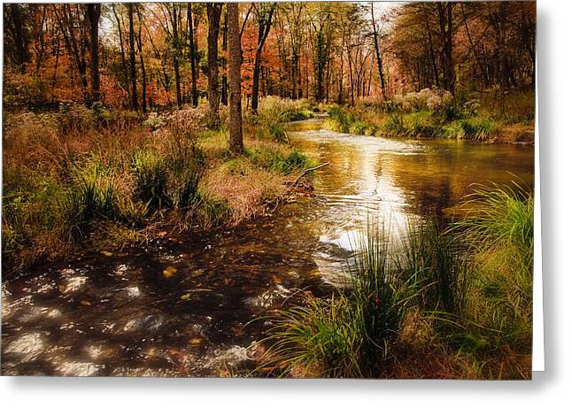 Tamyra Ayles Greeting Cards - Sparkling River at Beavers Bend Greeting Card by Tamyra Ayles