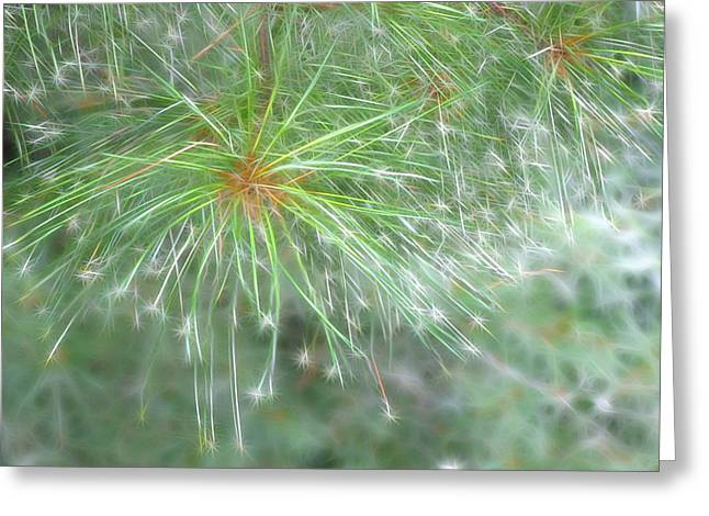 Pine Needles Greeting Cards - Sparkly Pine Greeting Card by Rhonda Barrett
