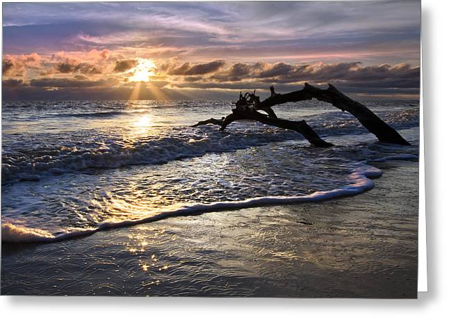 Sparkly Water At Driftwood Beach Greeting Card by Debra and Dave Vanderlaan