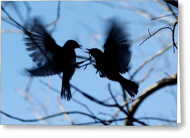 Bluebird Posters Greeting Cards - Sparring Bluebirds 5806-I Greeting Card by Suzanne  McClain
