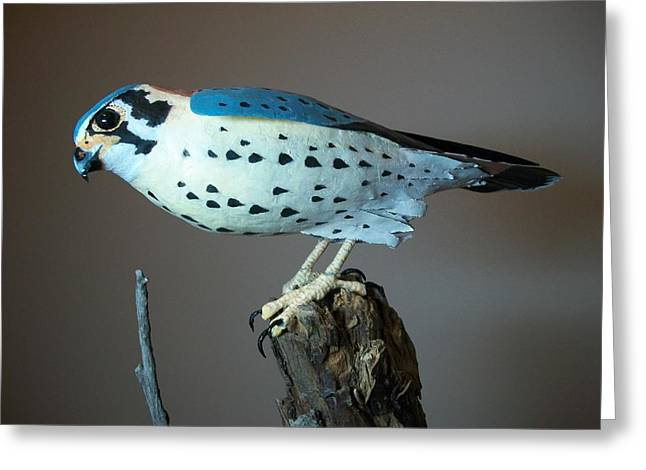Sparrow Sculptures Greeting Cards - Sparrow Hawk Greeting Card by Monte Burzynski