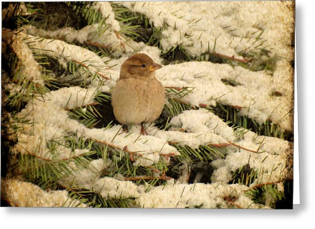 Sparrow In Winter II - Textured Greeting Card by Angie Tirado